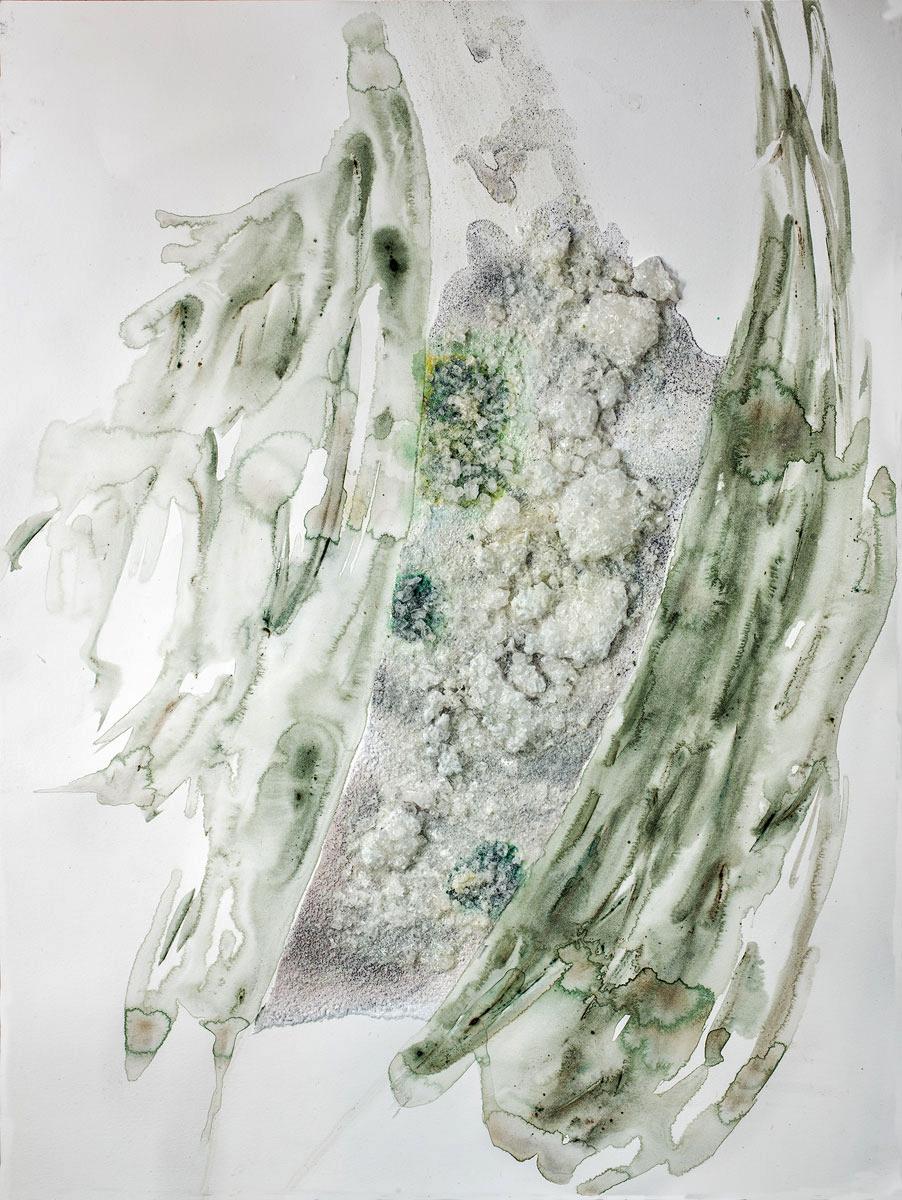 Lichens on Quartz