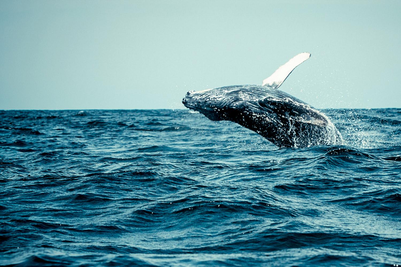 Whale-Watching.jpg