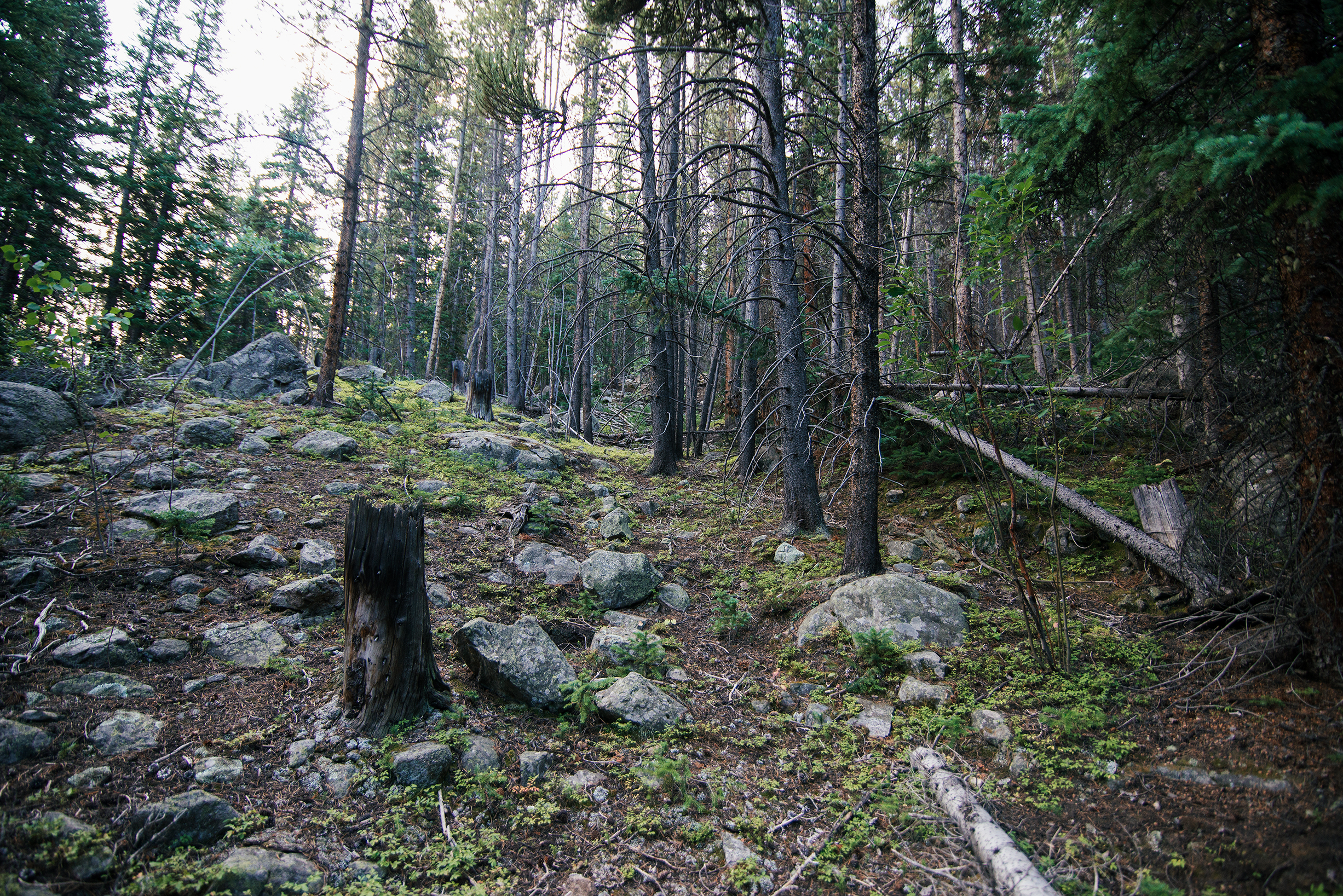 Mount Elbert Forest
