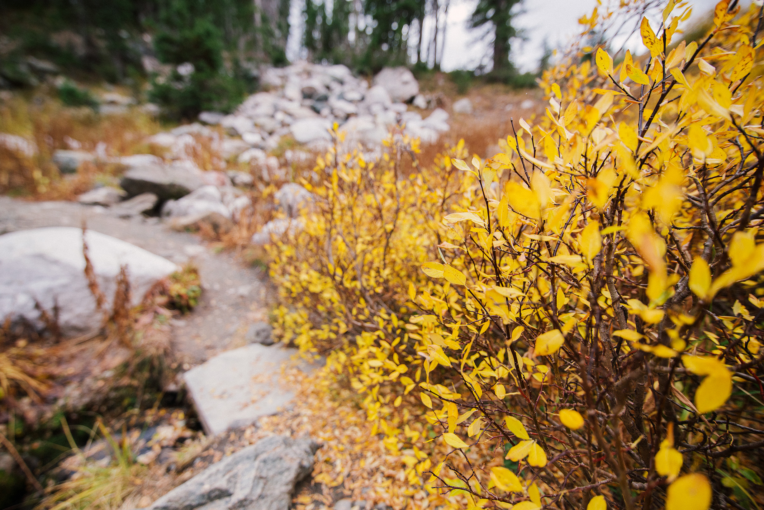 Fall colors in Medicine Bow National Forest