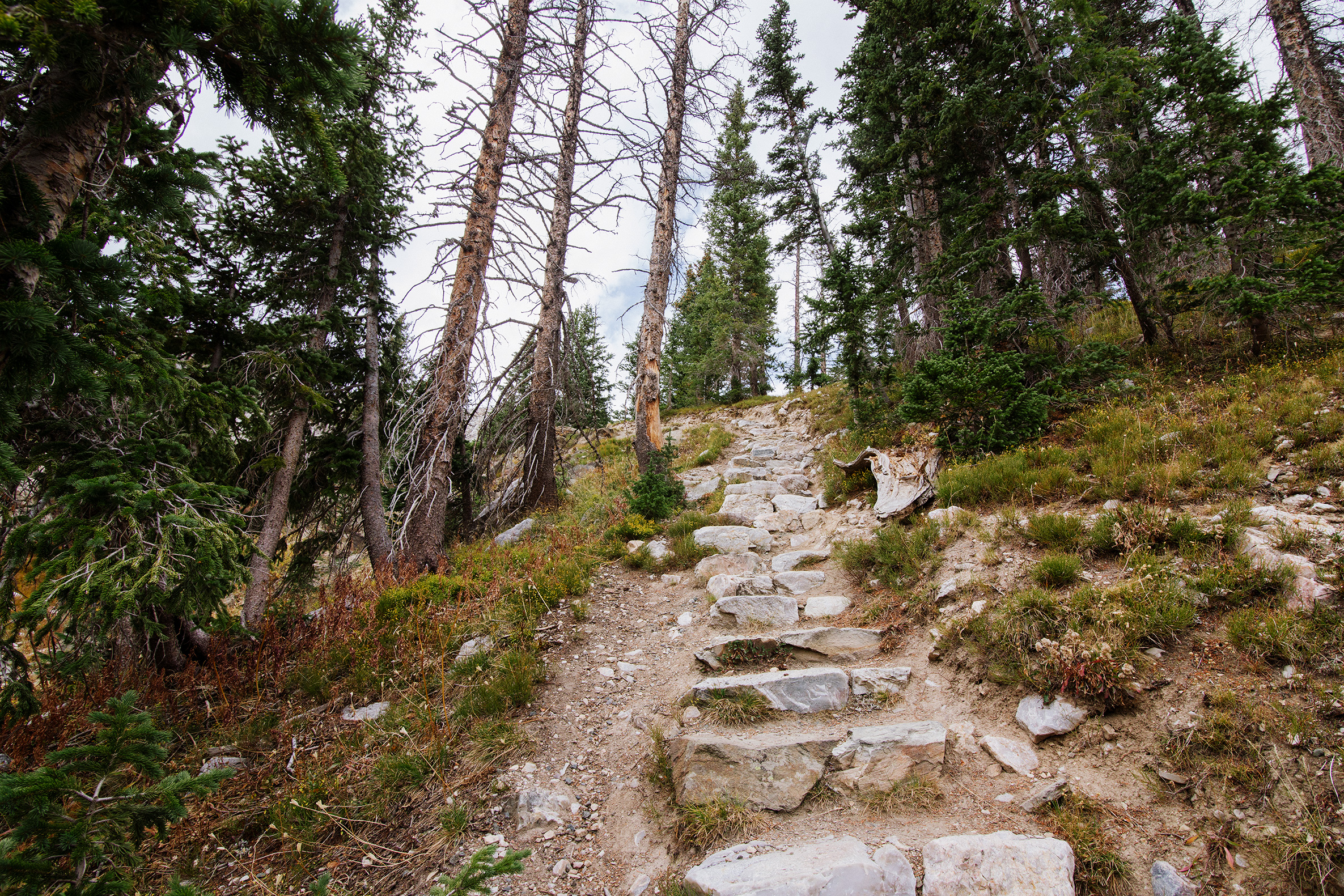 Stairs in Medicine Bow National Forest, Wyoming
