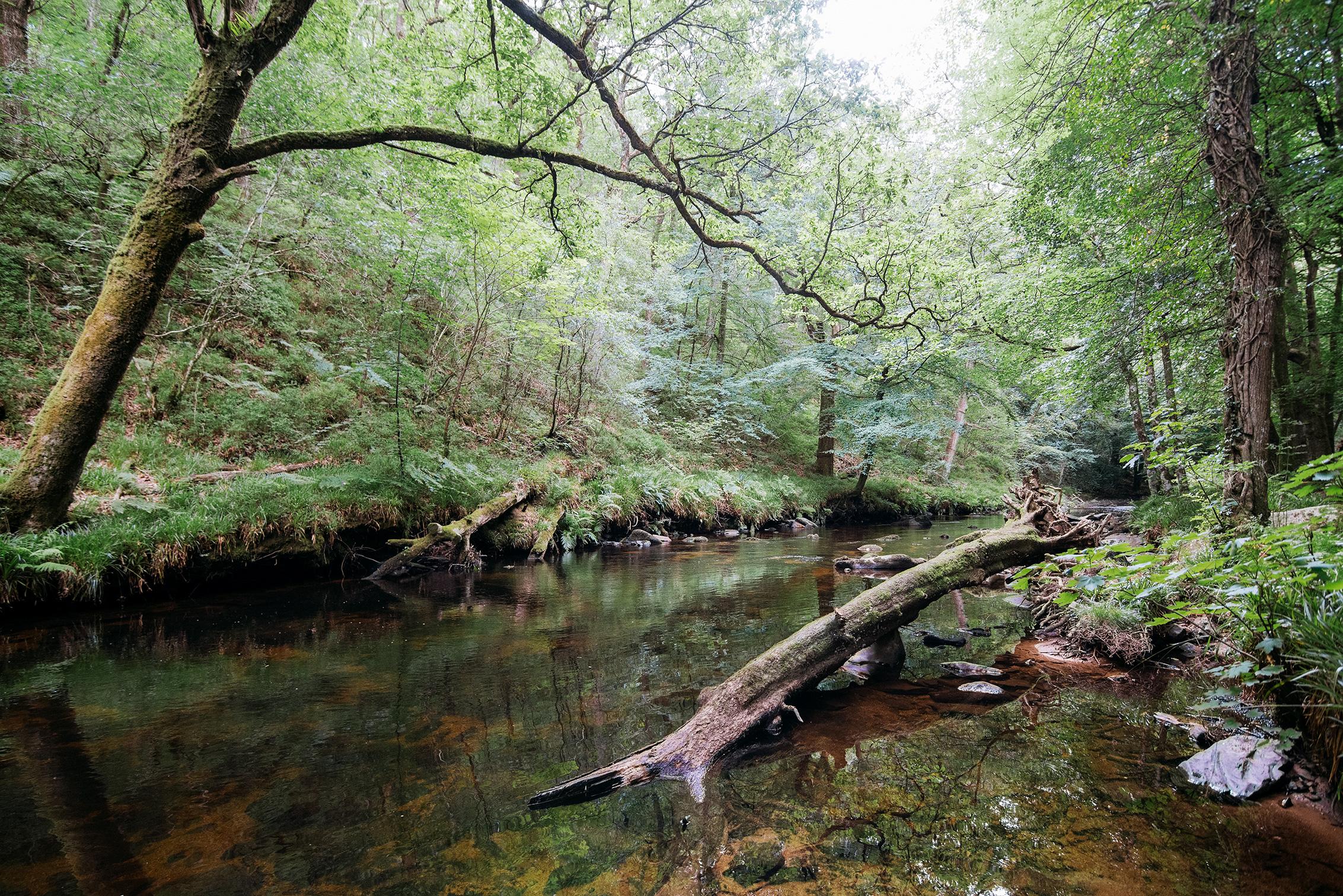 Fingle Bridge Hike (Along The River Teign)