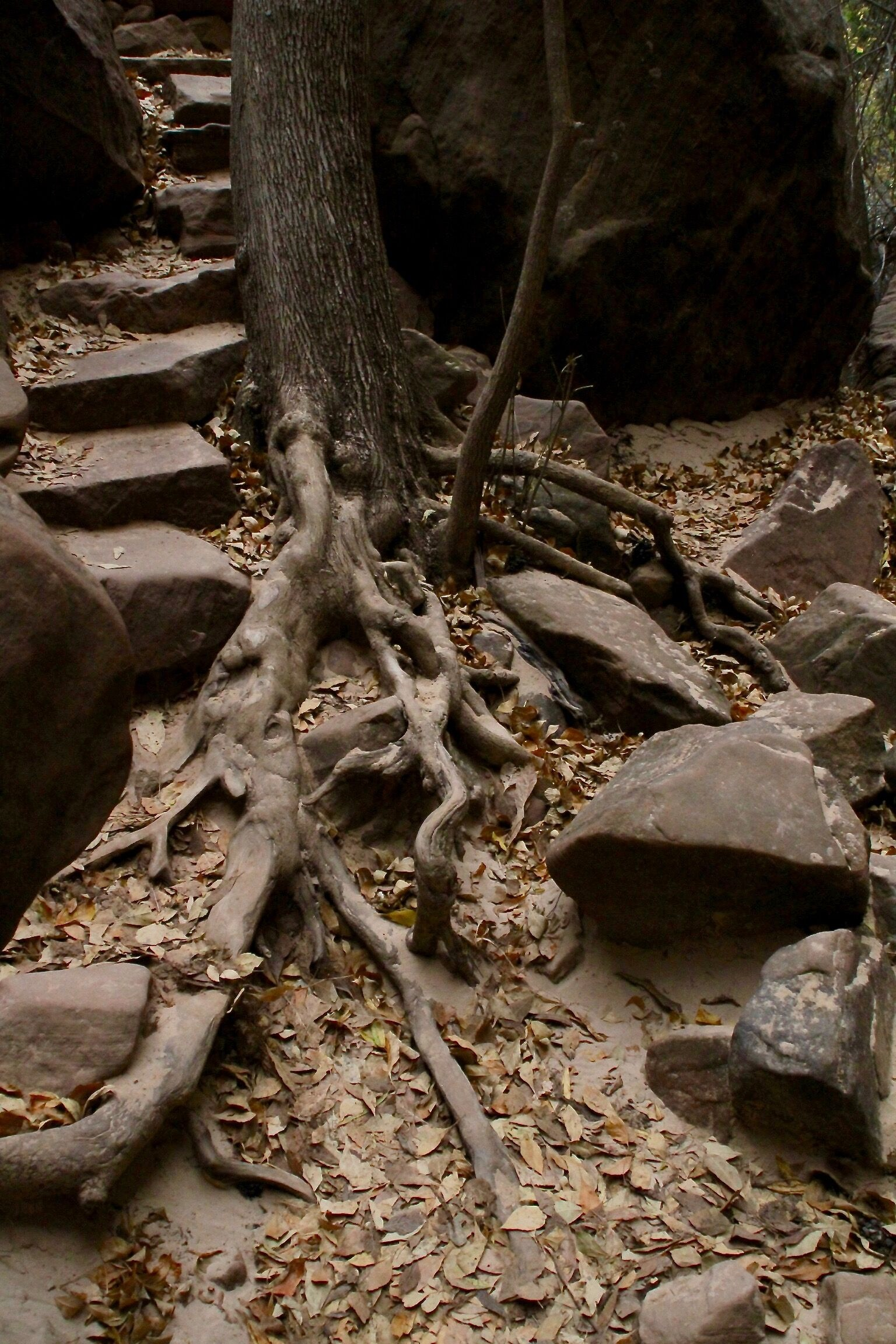 """Zion Stairs"" by Rob Katz is the winning image for the Film Days poster image contest."