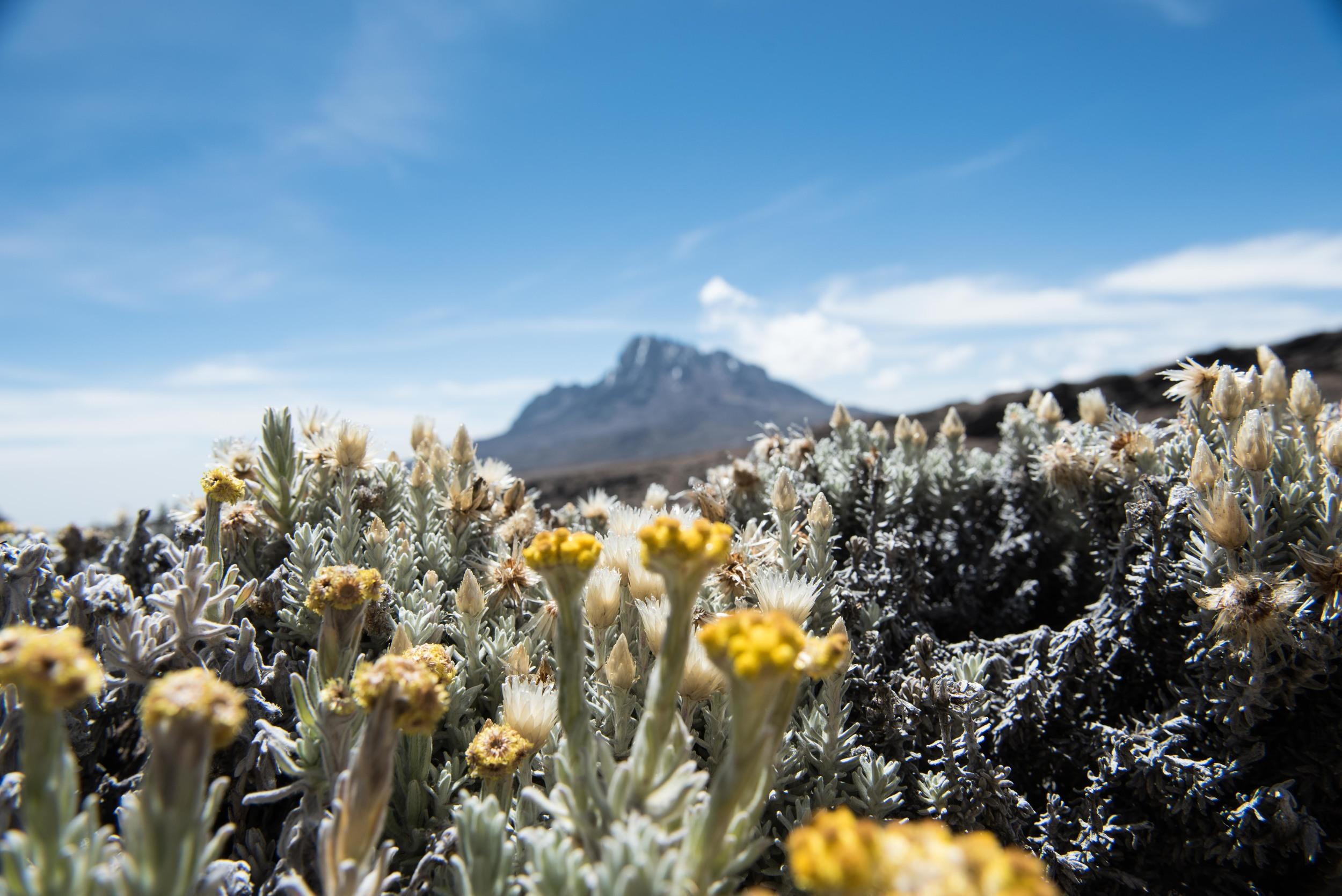 WEB_Kilimanjaro-22.jpg