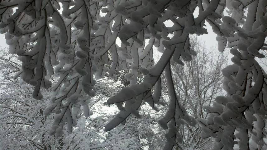 Snowy Trees at The White Rabbit Inn