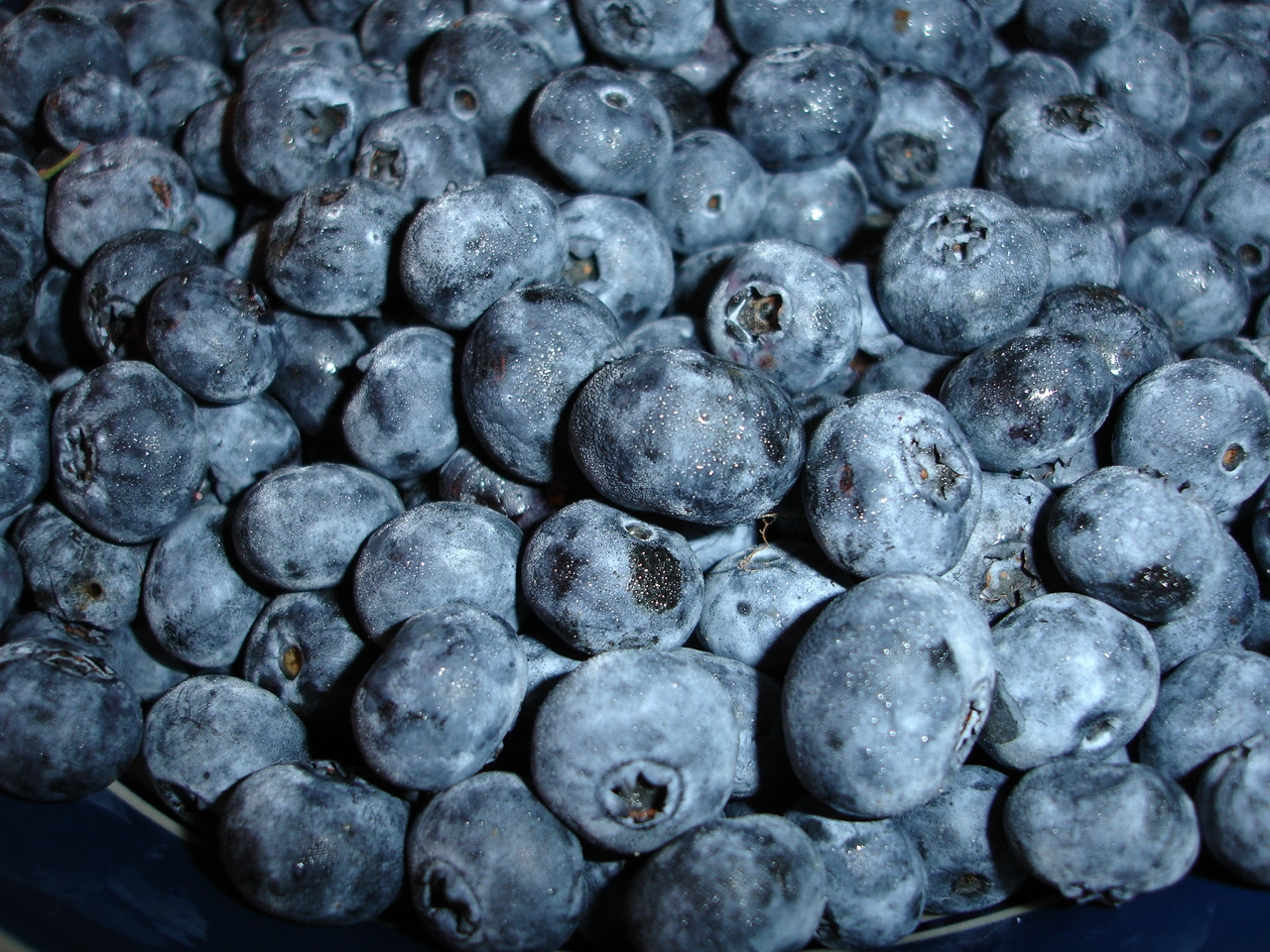 Fresh Michigan Blueberries at The White Rabbit Inn