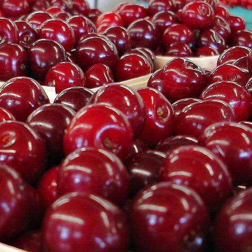 Fresh Michigan Tart Cherries