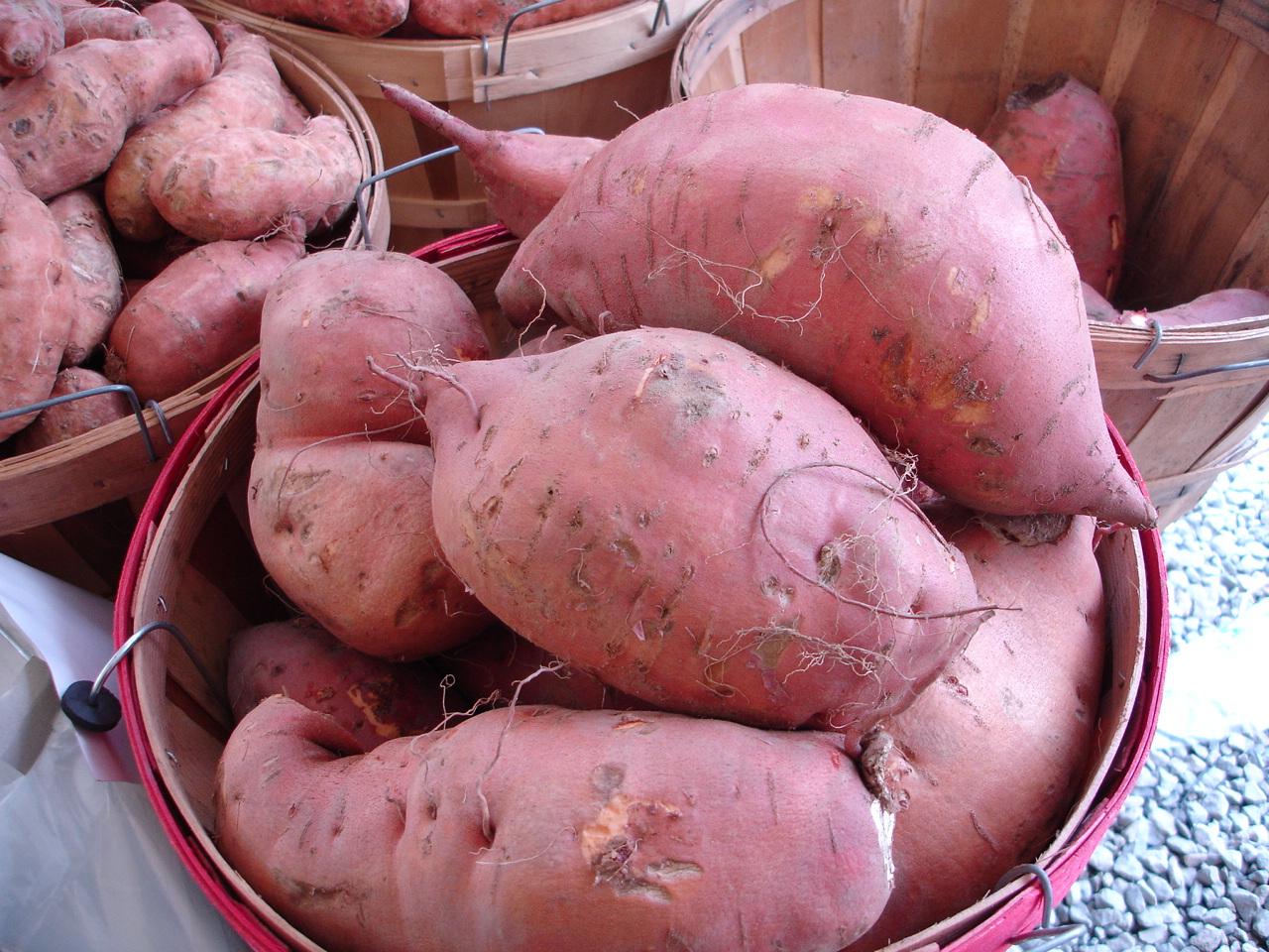 Fresh Michigan Sweet Potatoes