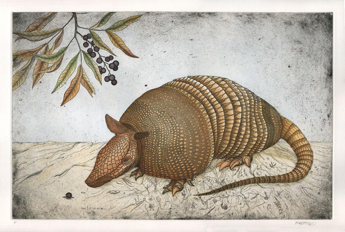Dasypus novemcinctus