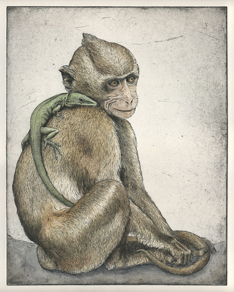 Macaque and Anole