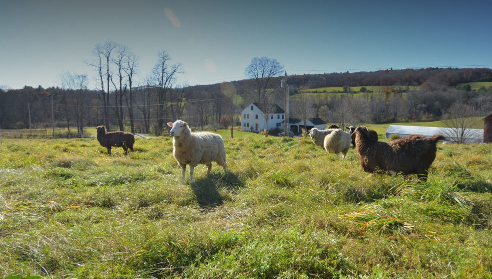 The Beautiful Bunker Farm