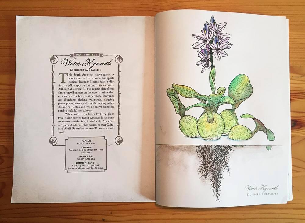 Open Book Spread