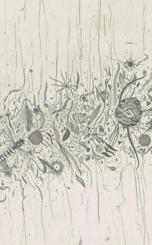 Iskandria by Brigit Peegan Kelly
