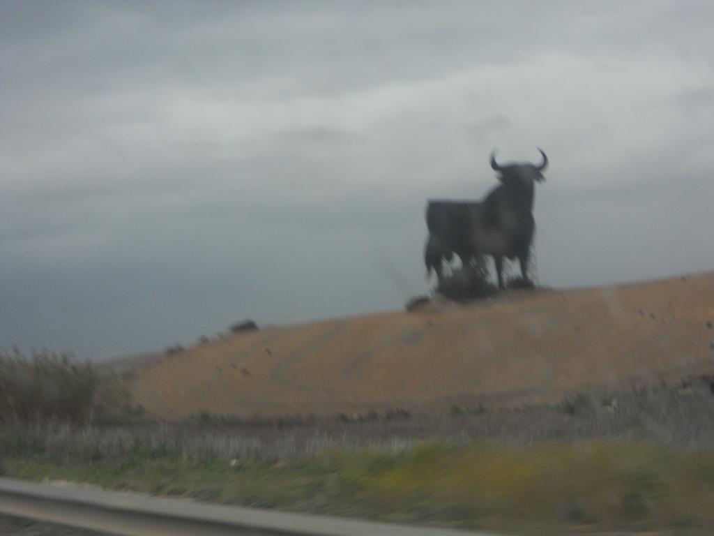 Black bulls on the hills.