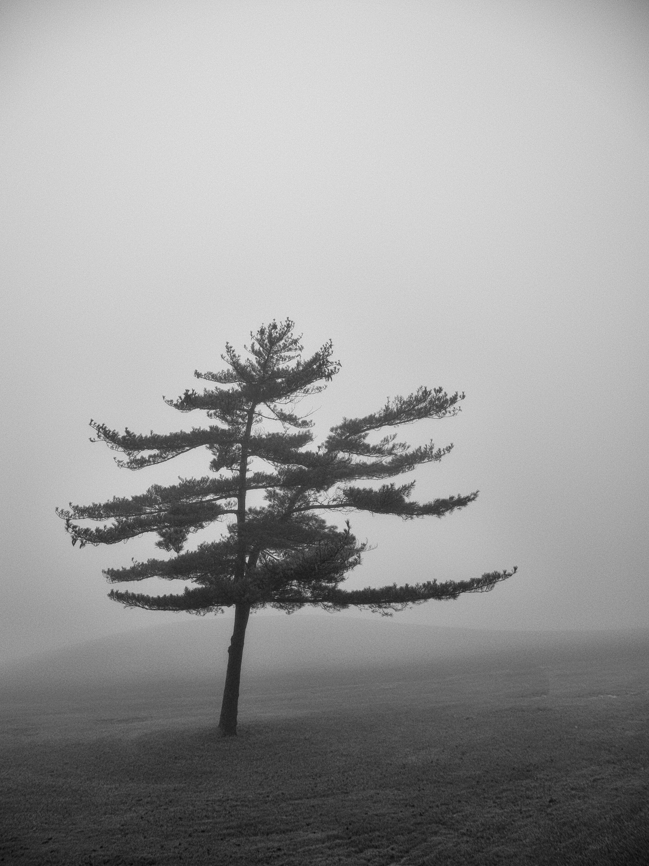 donetrees--3.jpg