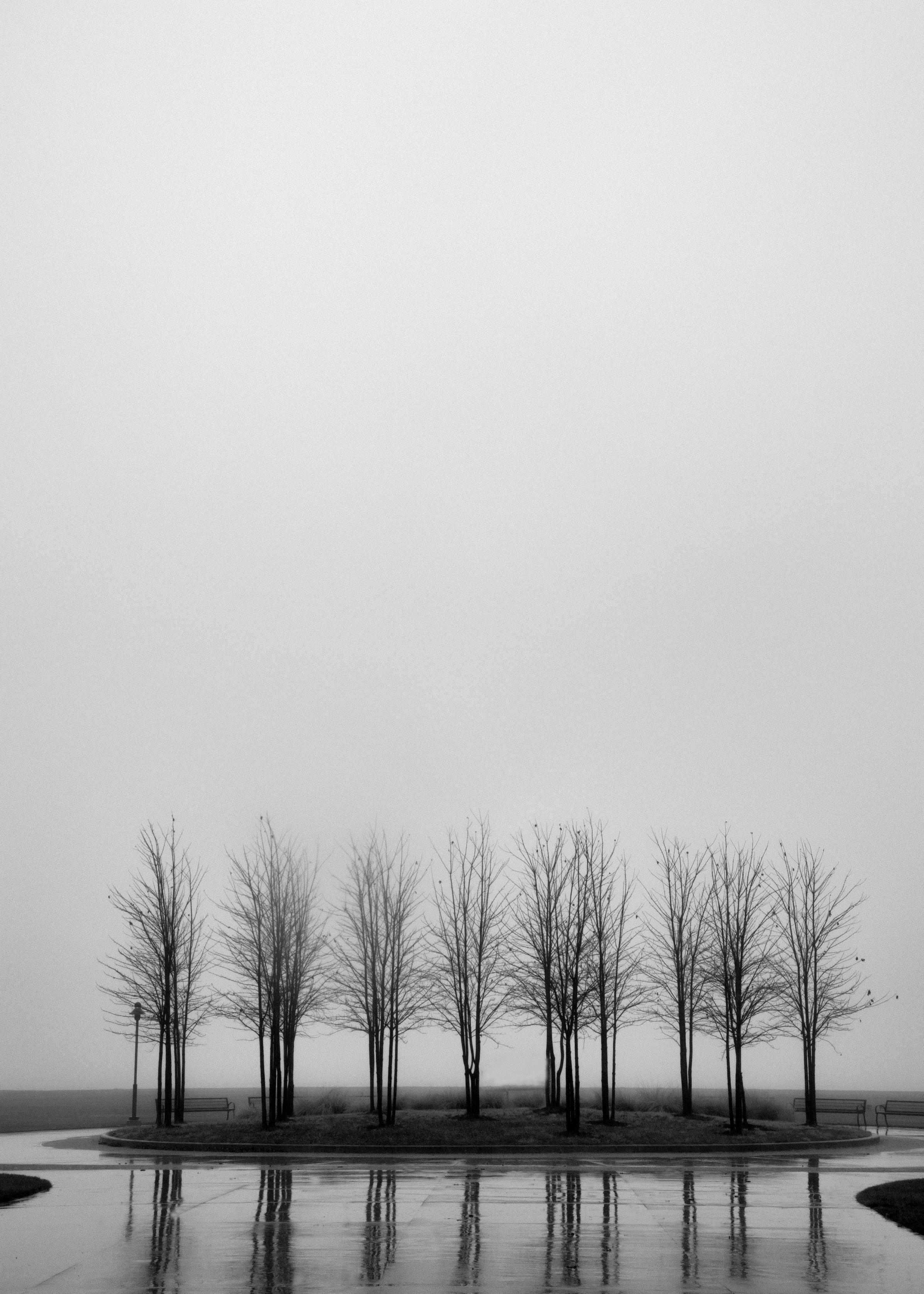 donetrees--11.jpg