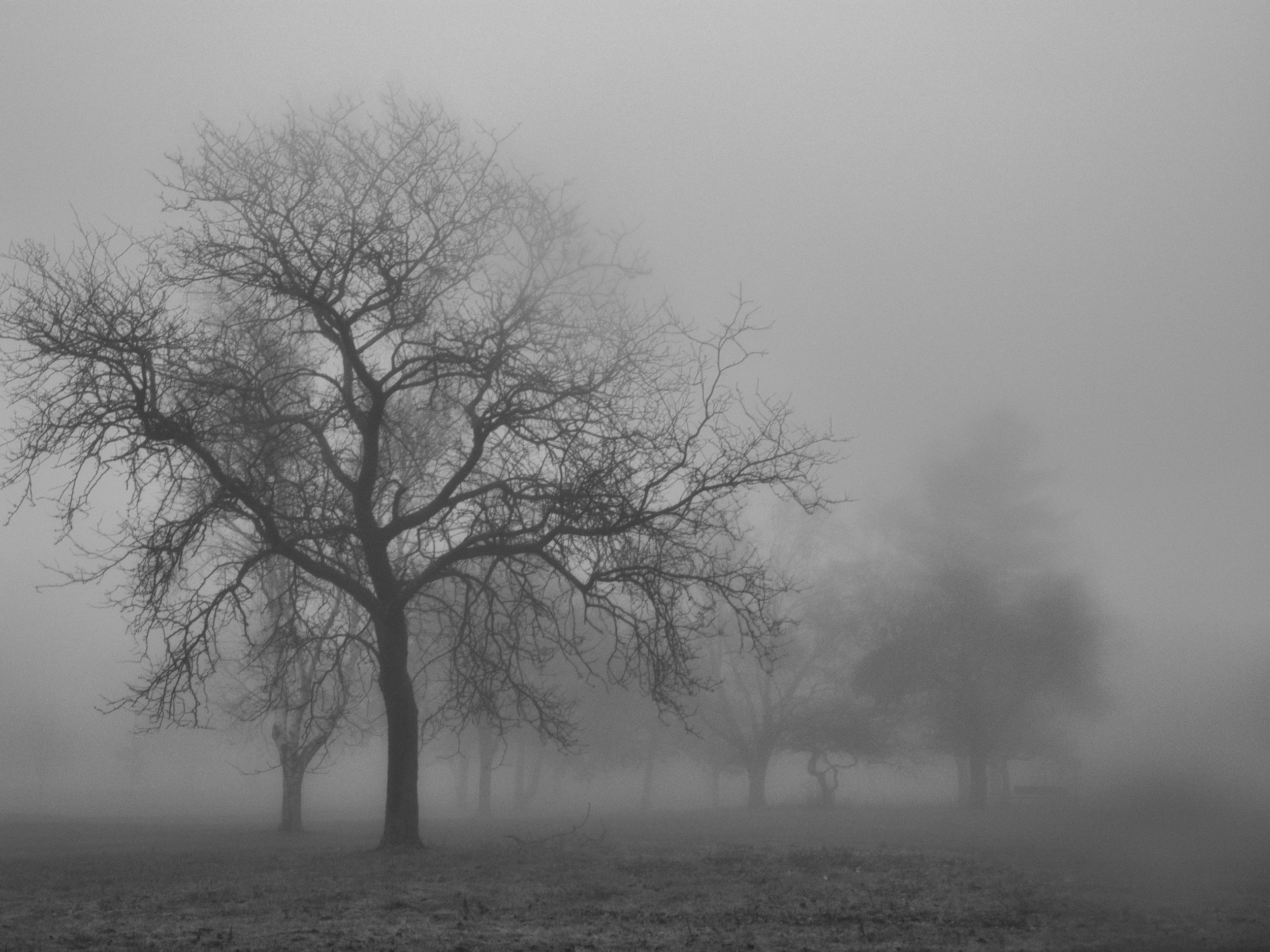donetrees--10.jpg