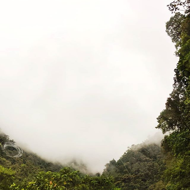 Somewhere in the clouds.  Ecuador 2019 #ecuador🇪🇨 #travel #teampixel #landscape #nature #cloudforest