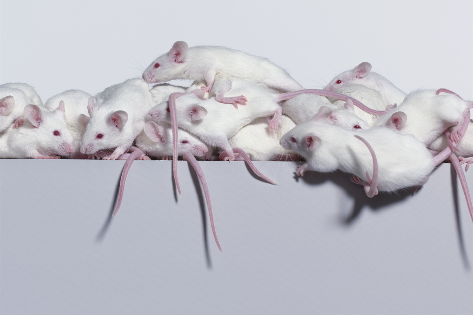 04_6_0_Mice_094_2T.png