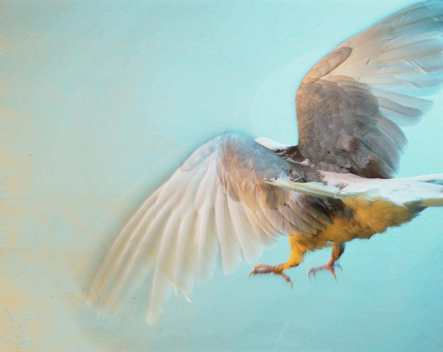 Scan_014 Bird_2H_crop.png