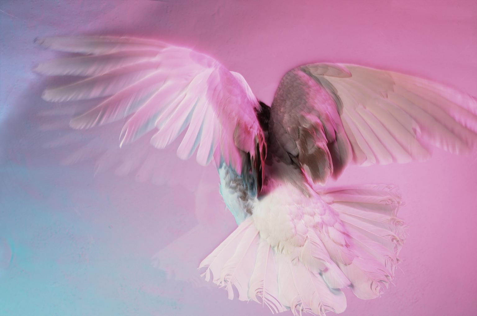 Scan_013 Bird_1H_crop.png