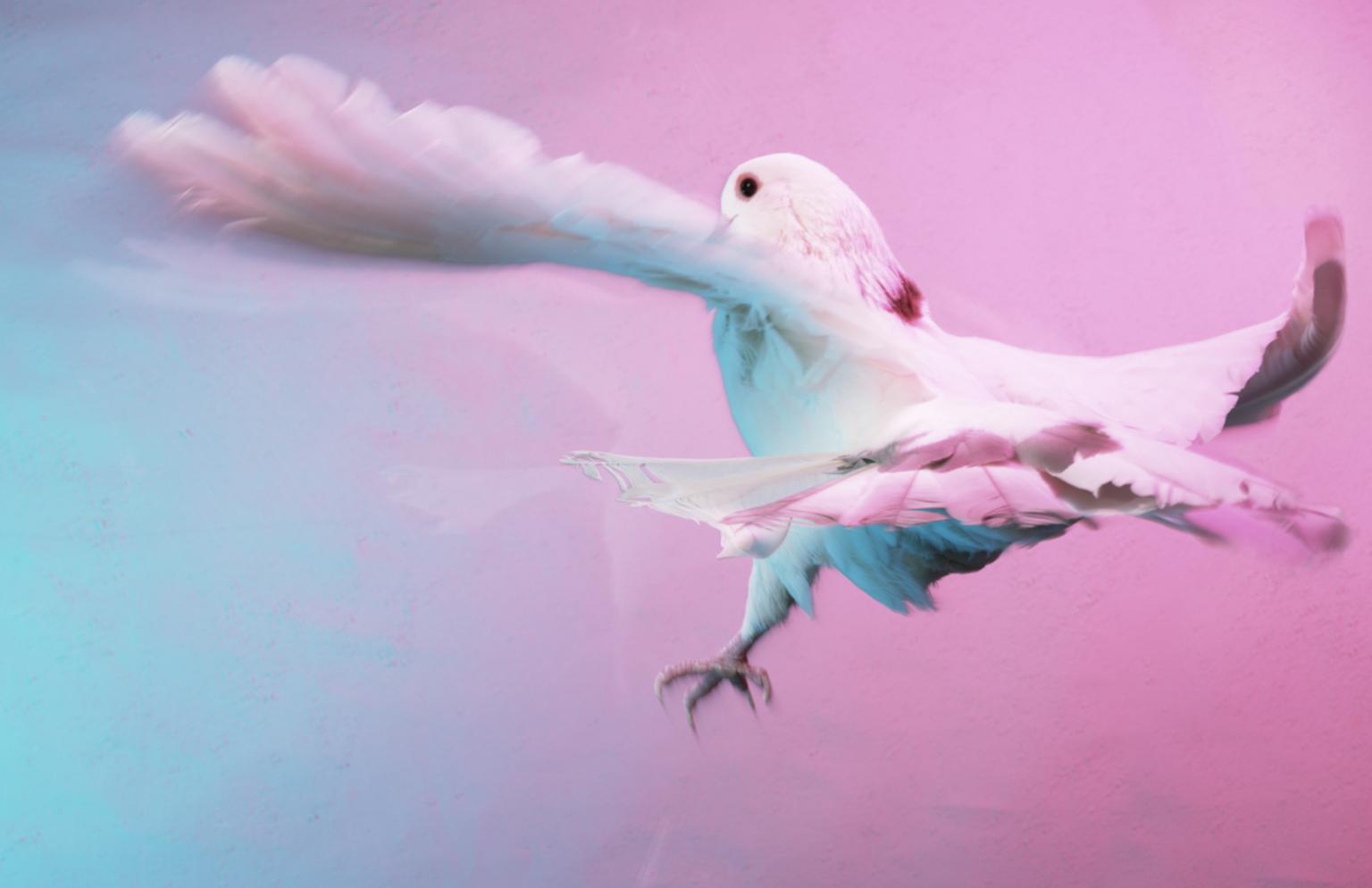 Scan_019 Bird_4800_1H.png