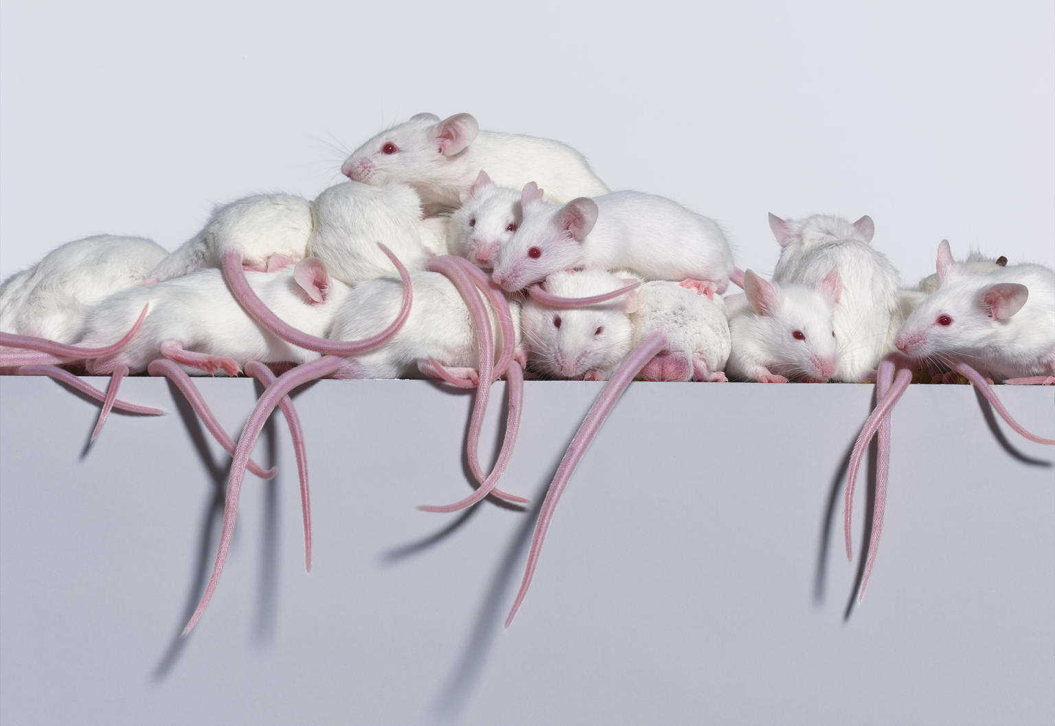 04_6_0_Mice_146_3T.png