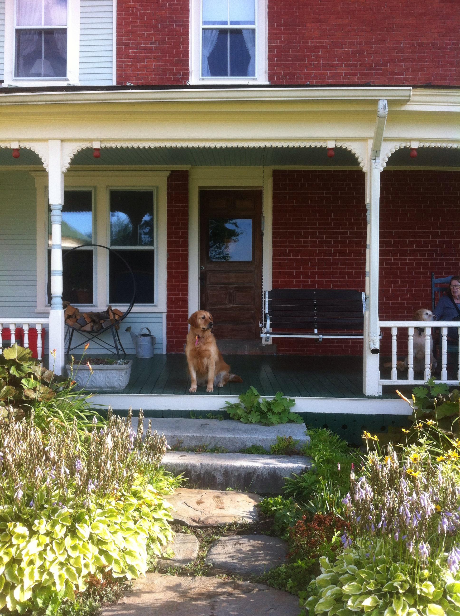 Hollister Hill Farm And Dog