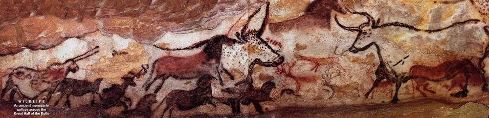 These are some of the images you will see on the walls of the caves in Southern France