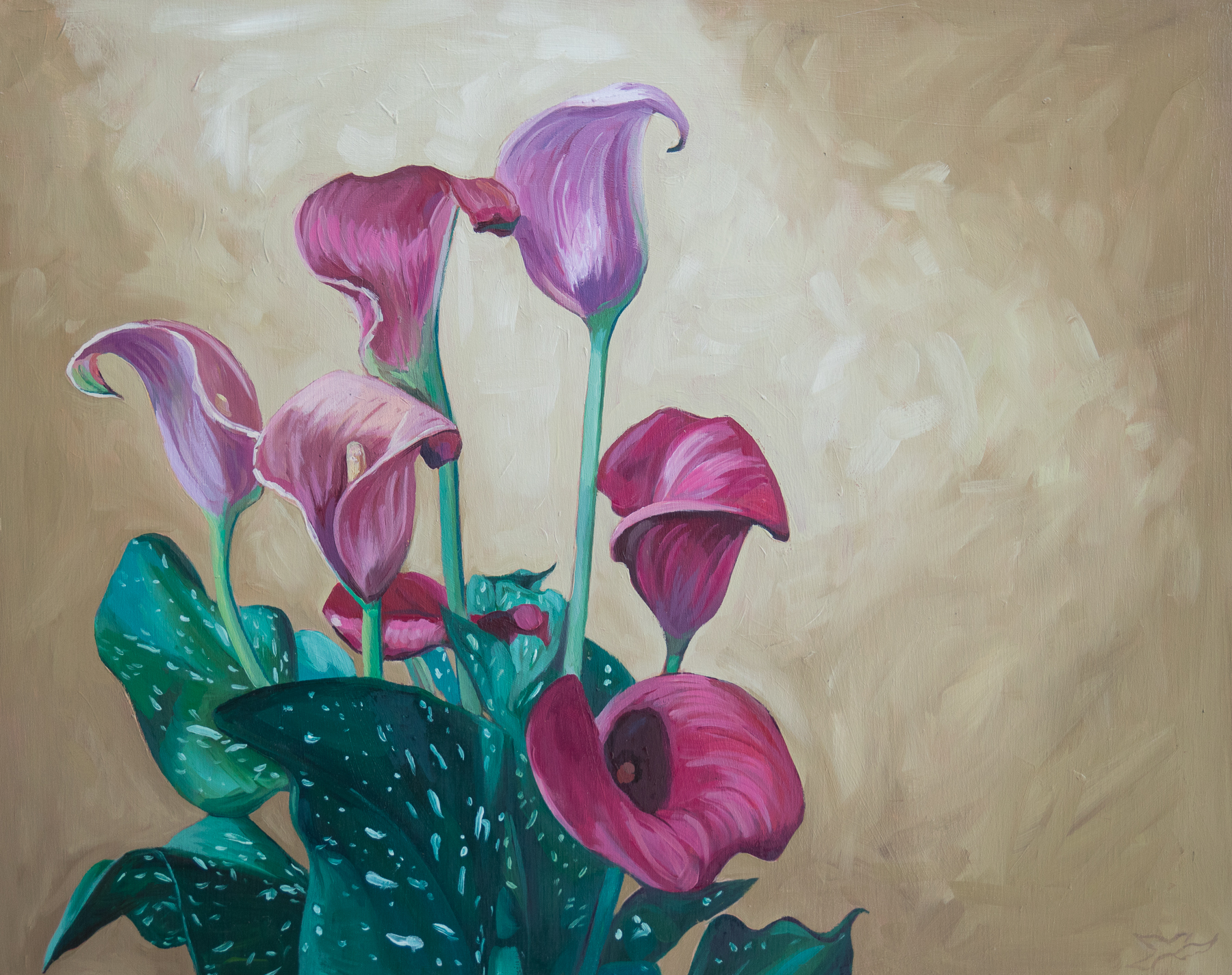 Calla Lilies no. 1 | 16x20 | oil on panel