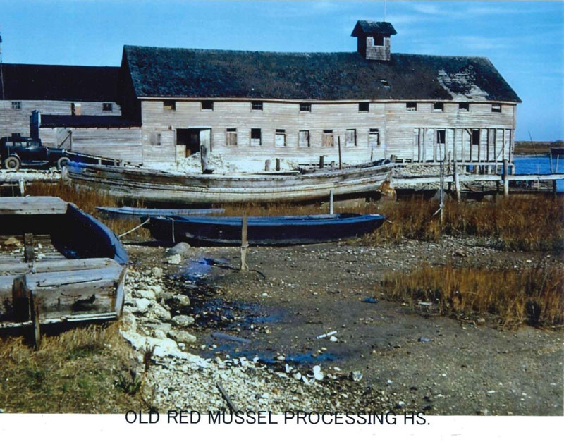 Old Red Mussel Processing House