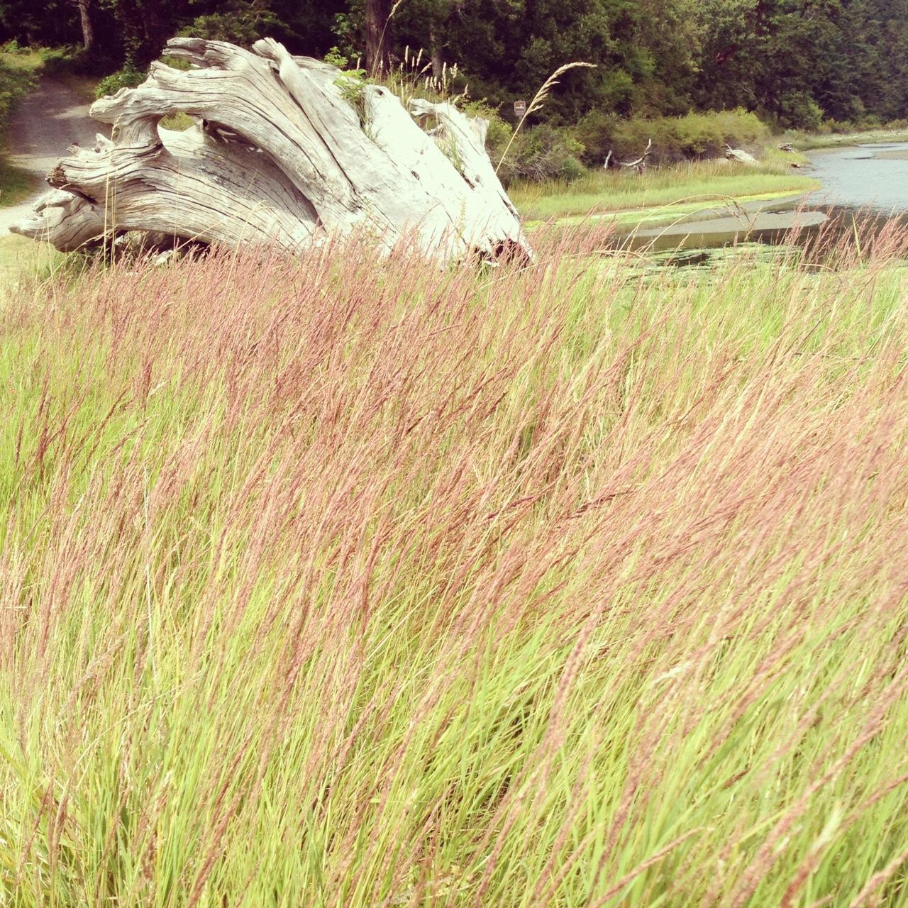 spencer spit marsh