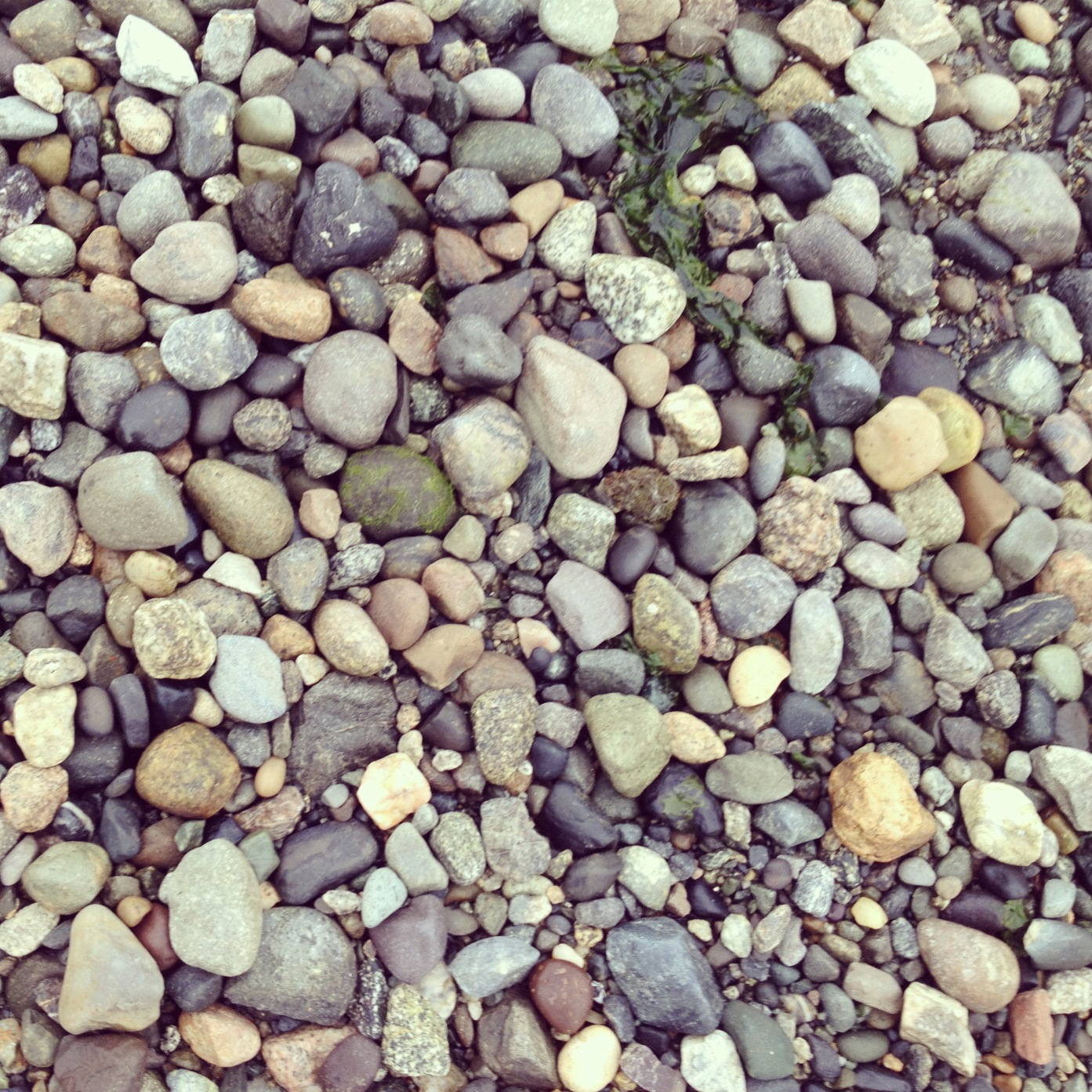 pebbles at anacortes