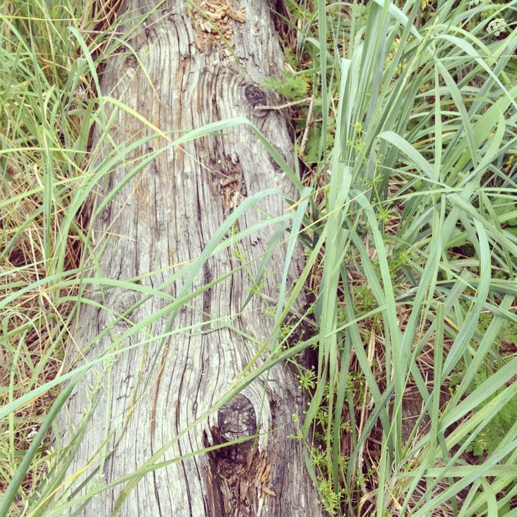 seagrass and log