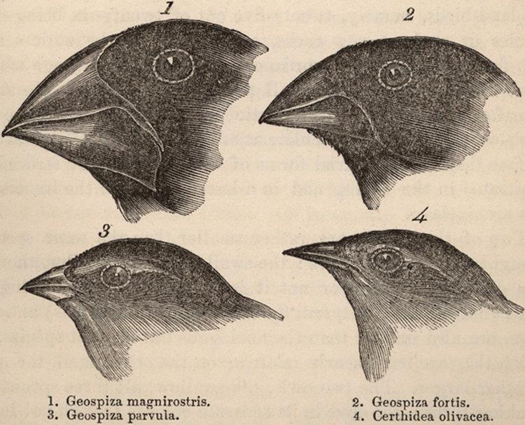 Darwin-Darwins-Finches.jpg