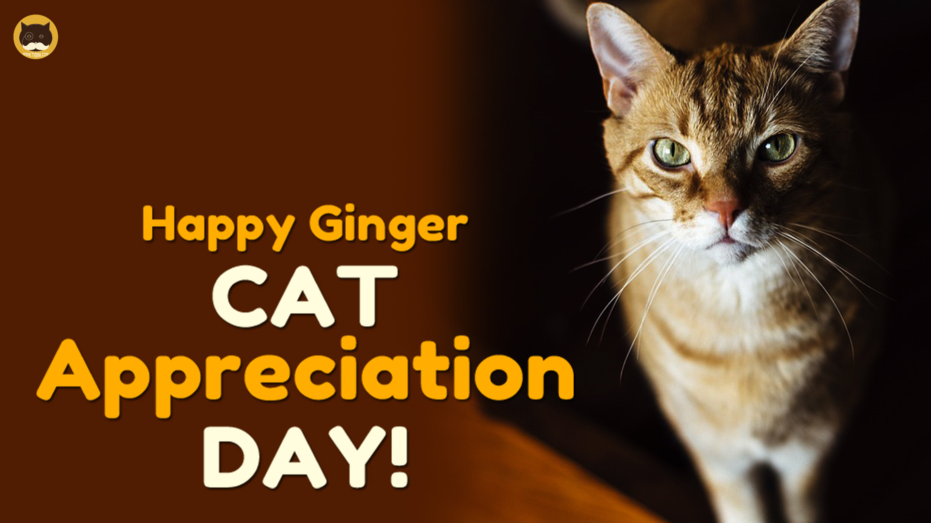 happy ginger cat appreciation day 01.jpg
