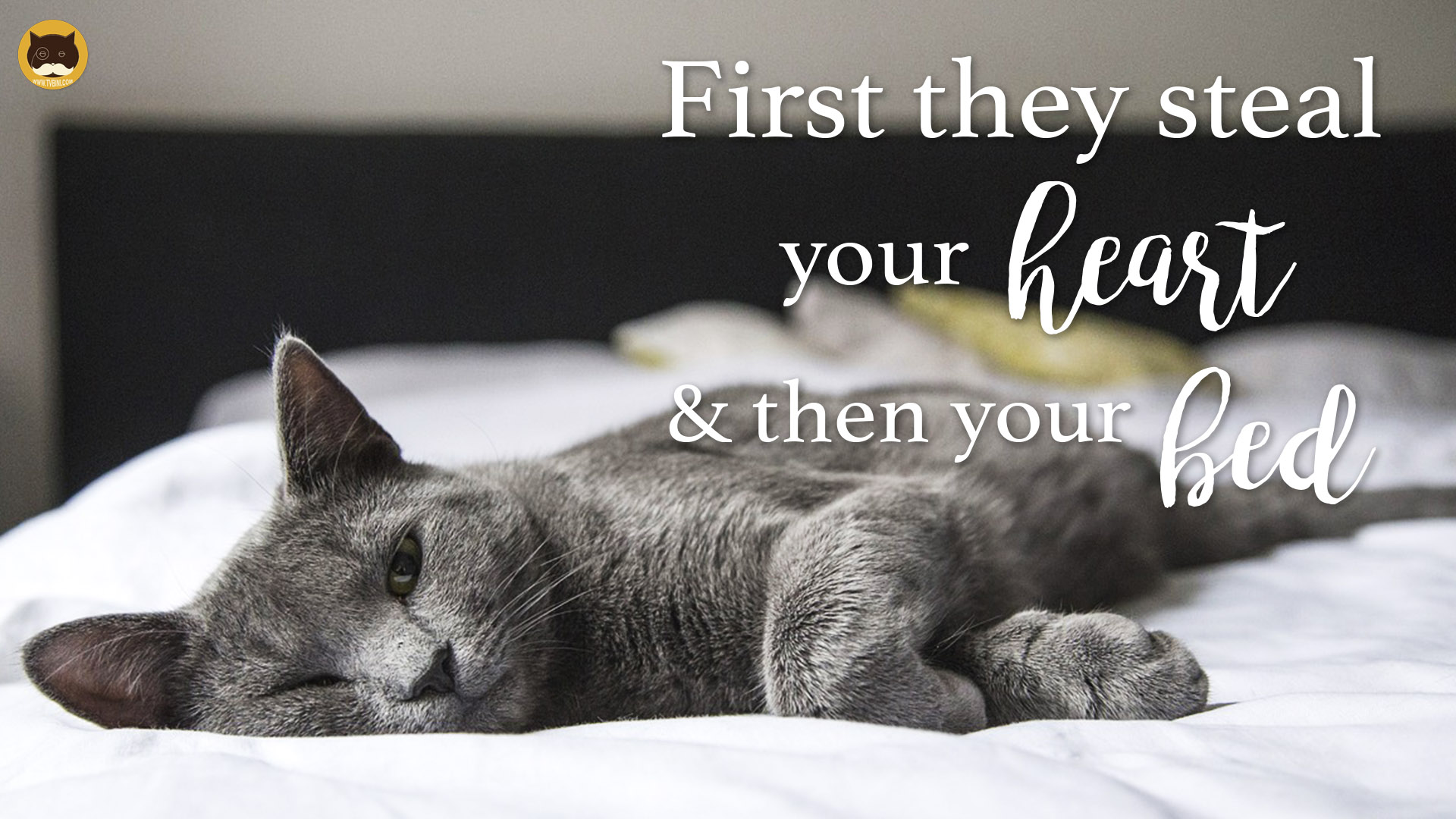 first they steal your heart then your bed1.jpg