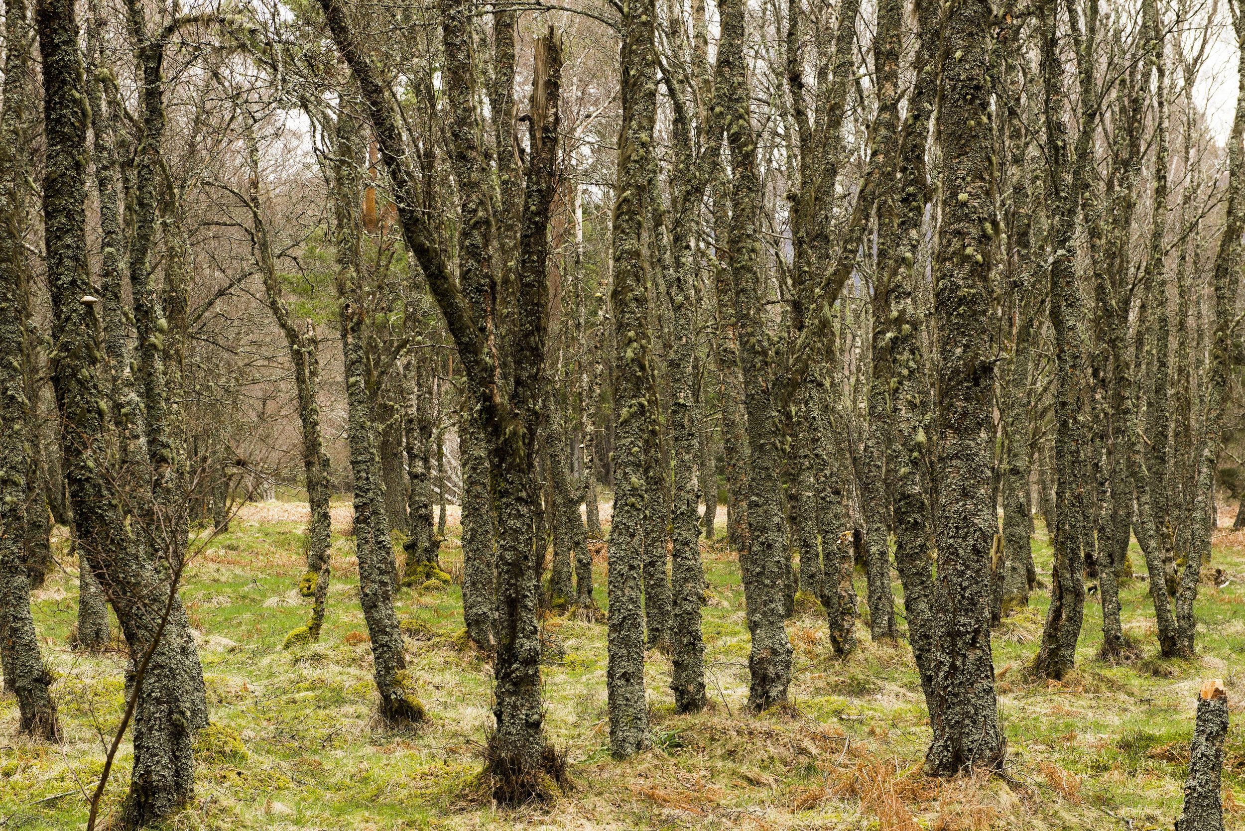 Highlands Trip_0052.jpg