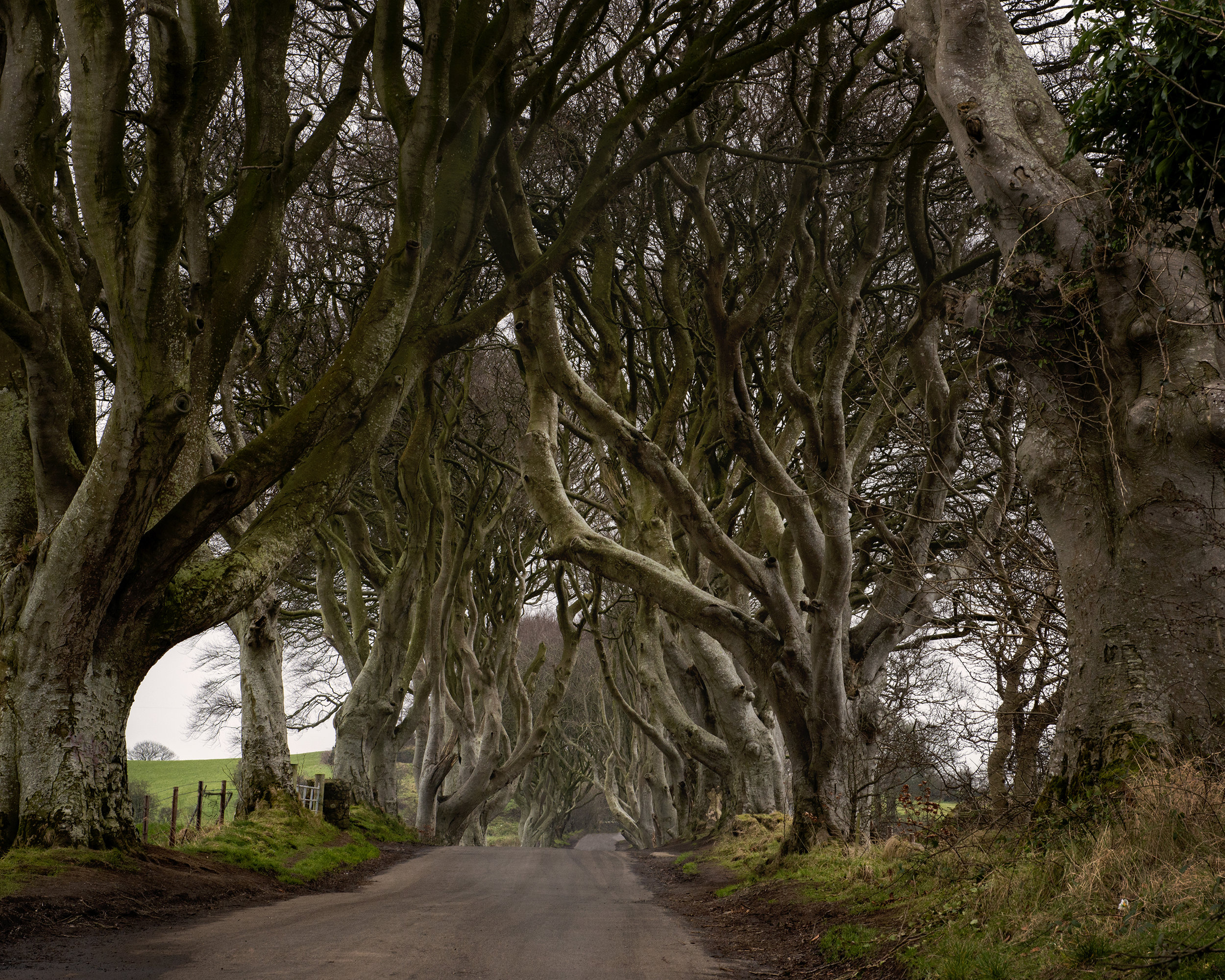 The Dark Hedges, N Ireland