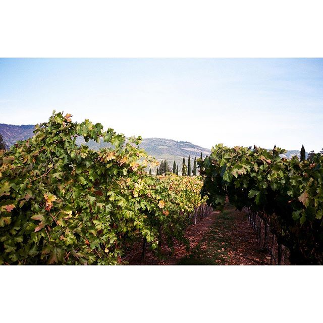 Grapes. #winetasting  #napavalley