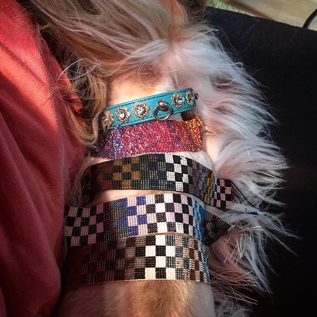 ...then she tried to bury me with even more beads!  I am sensing some issues........ #lovemyshihtzu #finny_finnoo #beadeddog #beadedpuppy #beads #loomwoven #loombeading #beadburied #iseeapatternhere #iseemyfuture #yycdogs #dogsofinstagram #dogsofyyc #dogsofcalgary