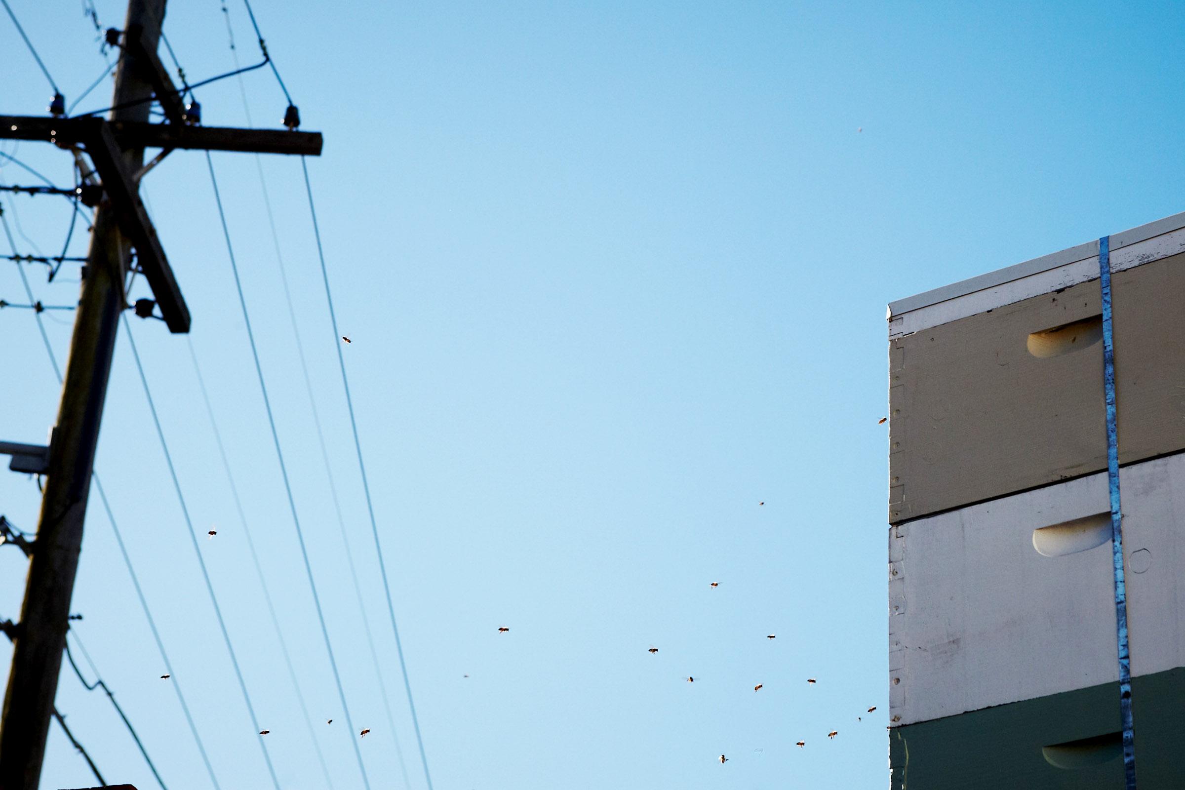 Beehives atop  Marrickville