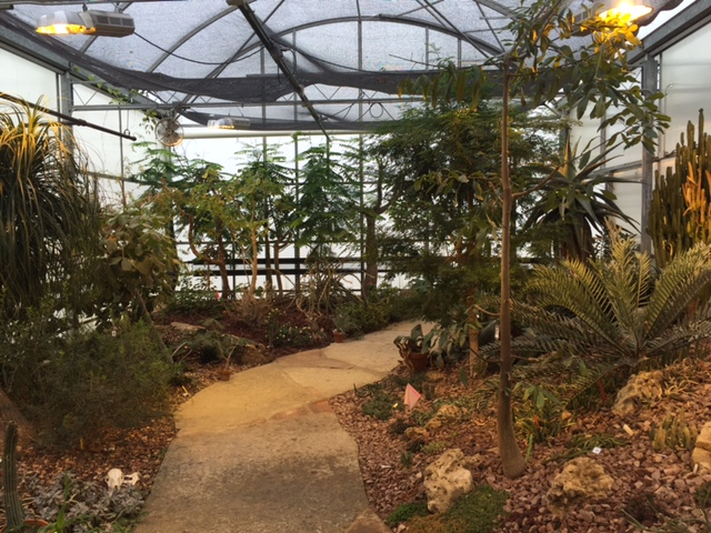 My mom made frequent visits to MSU's greenhouse during winter chemo bouts. Image source: https://plantbiology.natsci.msu.edu/facilities/teaching-conservatory-and-collection/