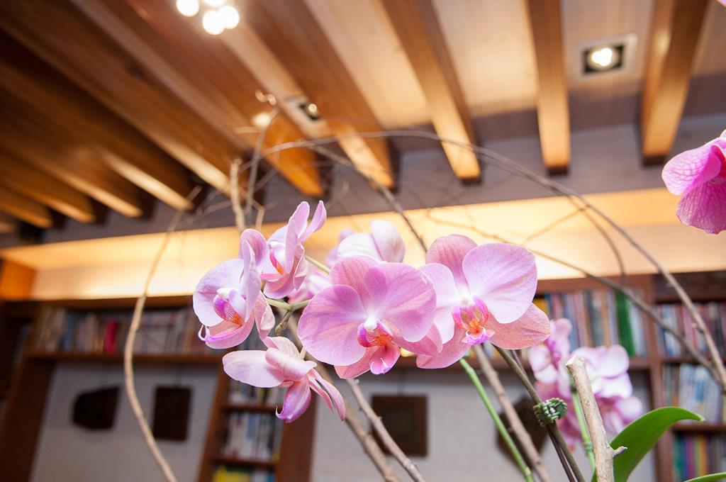 裝飾-蘭花