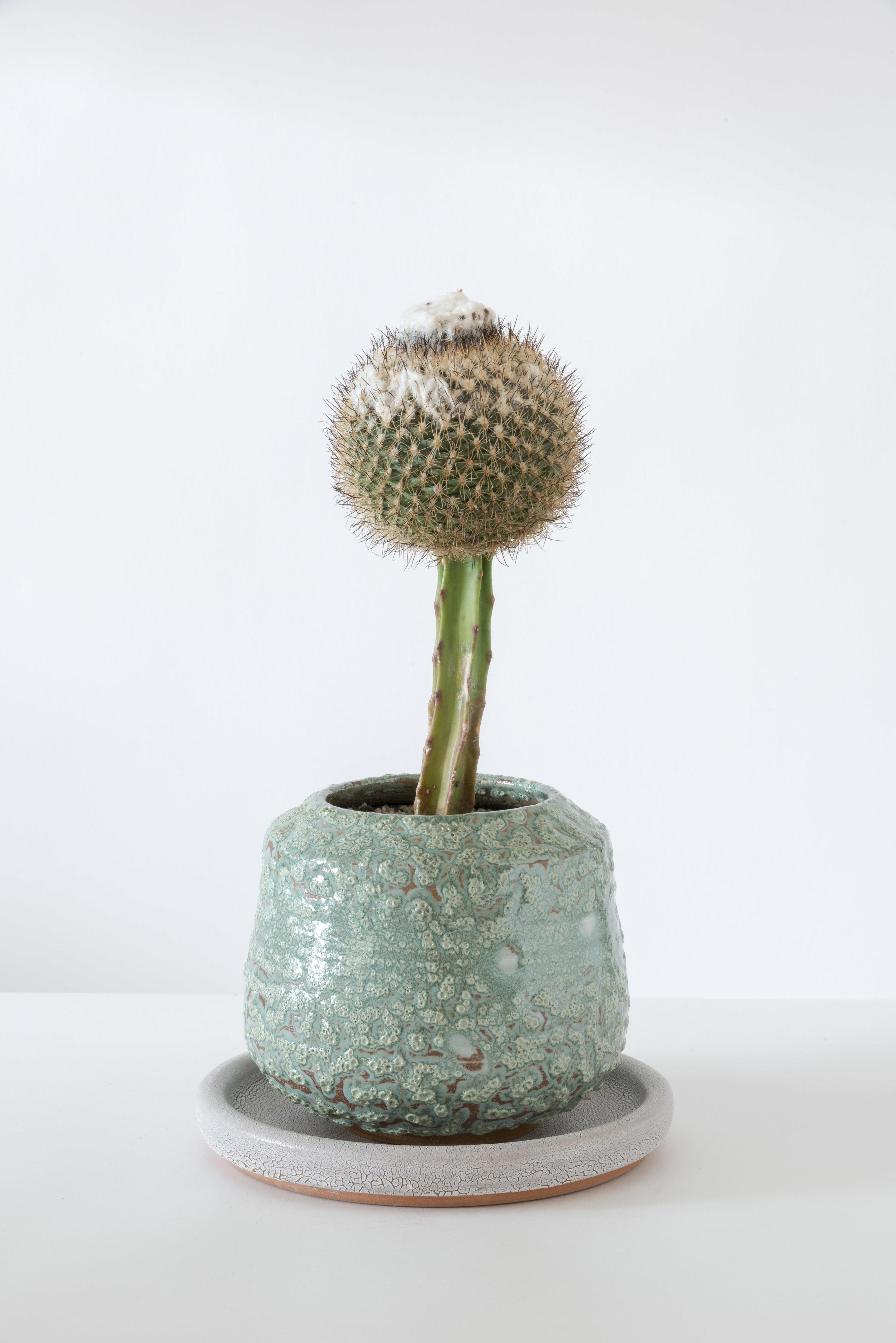 Photo: Joshua White A Tale of Plant & Pot LA
