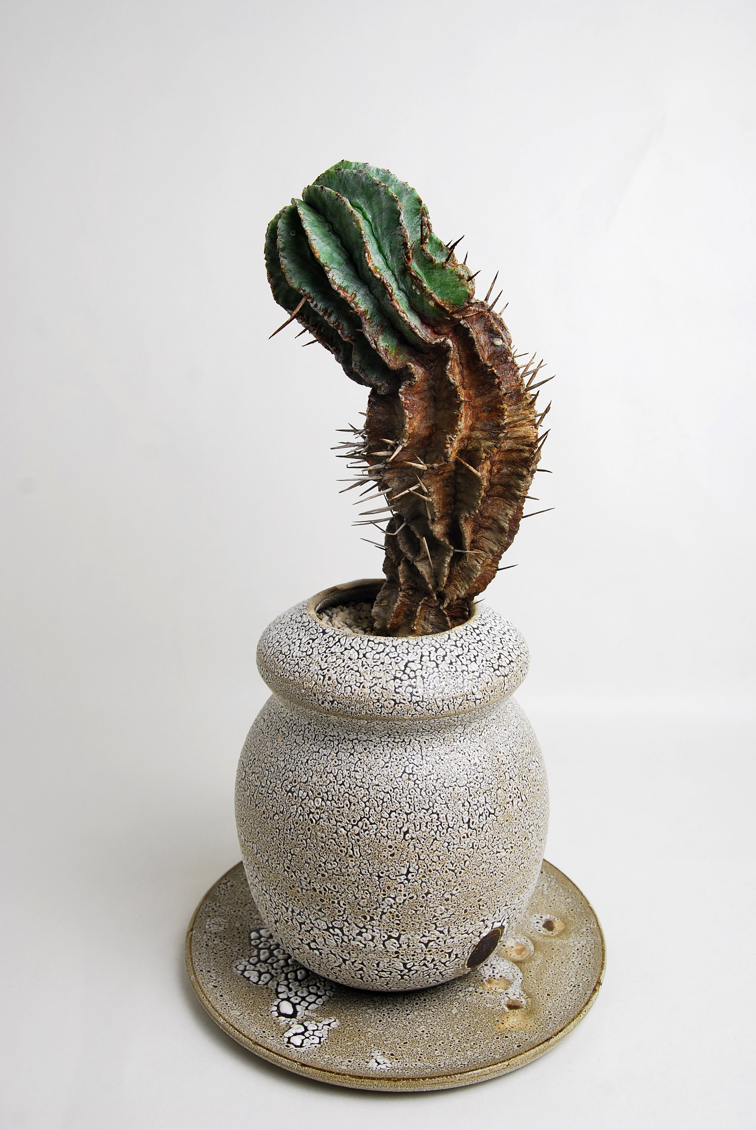 A Tale of Plant & Pot LA