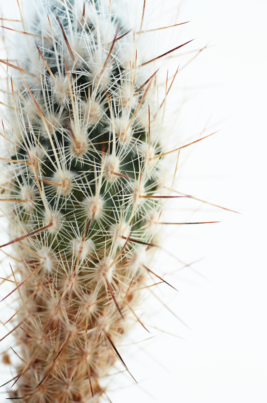 chariots on fire cactus detail.png