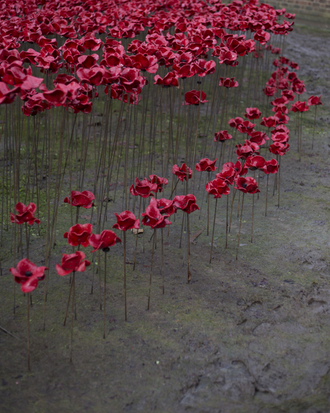 Poppies14 (4 of 39).jpg