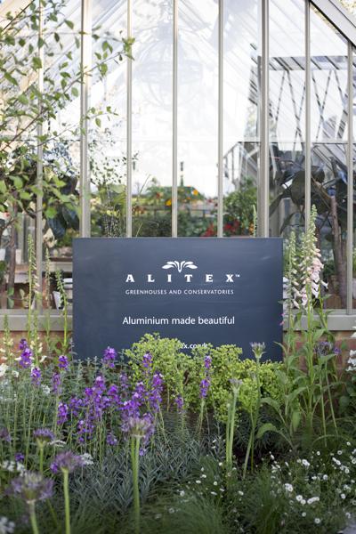 AlitexChelsea-1.jpg