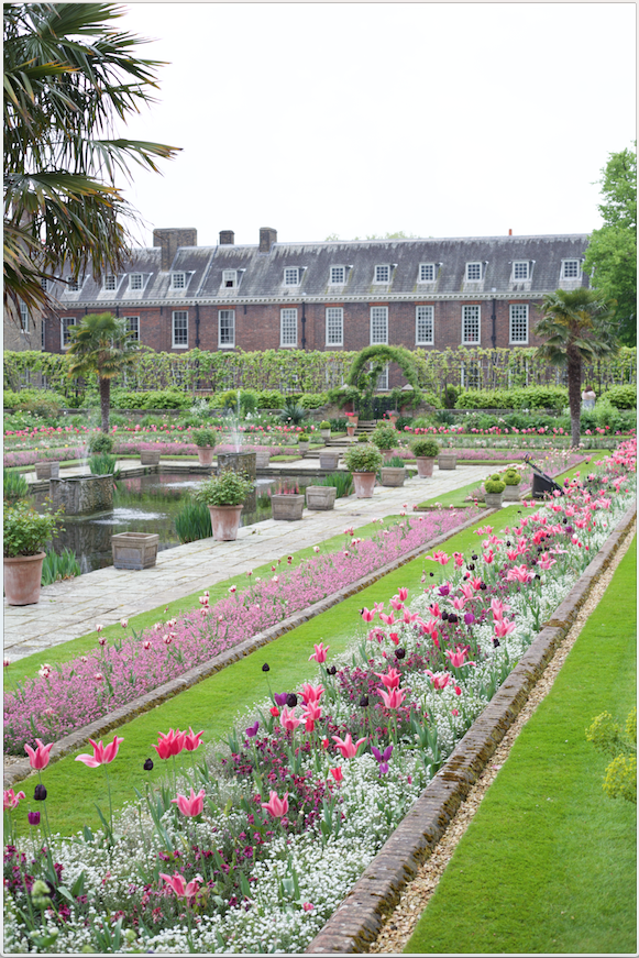 Friday Morning….Kensington Palace……waiting for my family client to arrive I admired the flower beds with the spectacular tulips!!
